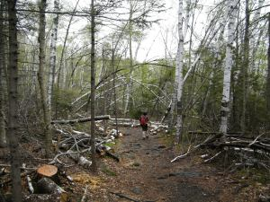 Hiking through trails damaged by last winter's ice storm.